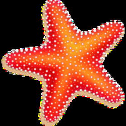 Download Starfish Free PNG photo images and clipart   FreePNGImg