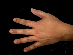Five Finger Hand PNG Image - PurePNG | Free transparent CC0 PNG ...