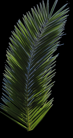 Palm Tree Tube Stock VI PNG by digitaltwist on deviantART | Artsy ...