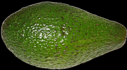 File:Avocado.png - Wikimedia Commons
