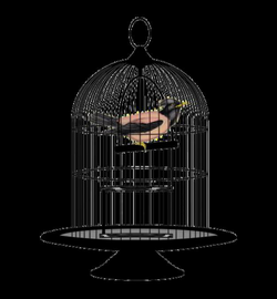 birds cage png