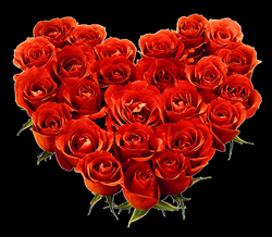 bouquet of roses png