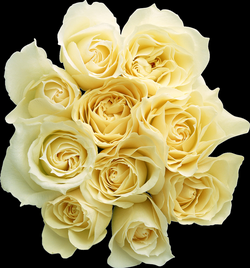 bouquet of white roses png