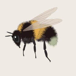 bumblebee clipart realistic