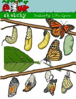 butterfly clipart growth