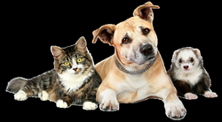 cats and dogs png