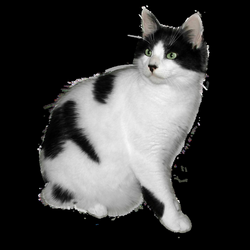 Black and white cat FREE png stock by JaneEden on DeviantArt
