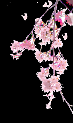 Cherry blossom Download Illustration - A cherry blossom 1629*2728 ...
