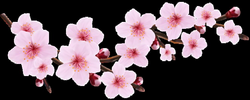 Blossom Spring Pink Twig Transparent PNG Clip Art Image | DECOUPAGE ...