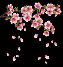 Beautiful Pink Spring Branch with Falling Petals PNG Clipart | print ...