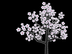 blossom drawing sakura tree