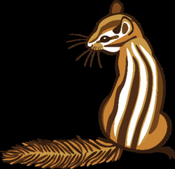 Chipmunk | Clipart | Science | Image | PBS LearningMedia