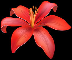 Red Lily Flower PNG Clipart - Best WEB Clipart