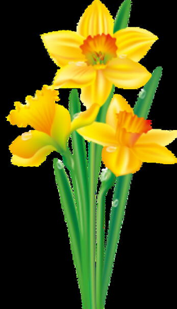 Daffodil Flower Clipart 0104214e0ec36daorig flowers clip art and ...