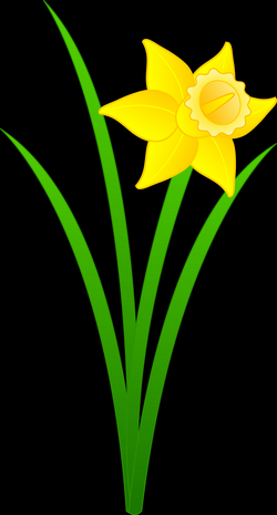 Yellow Daffodil Flower | Clipart Panda - Free Clipart Images