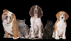 dogs and cats png