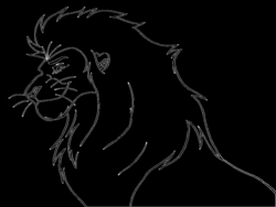 drawing lions male lion
