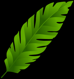 Fern Clipart at GetDrawings.com | Free for personal use Fern Clipart ...