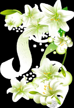 white flower png | White Flowers Element Free Transparent Clipart ...