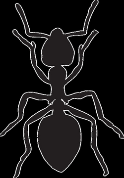 vector organism insect