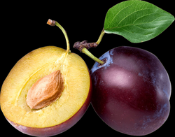 Open Plum transparent PNG - StickPNG