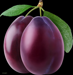 Free PNG Plums Transparent Plums.PNG Images. | PlusPNG