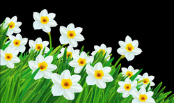 Transparent Grass with Daffodils Clipart | Gallery Yopriceville ...