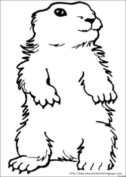 Groundhog clipart color, Picture #1610426 groundhog clipart ...