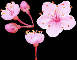 Spring Cherry Blossoms PNG Clip Art Image | Gallery Yopriceville ...