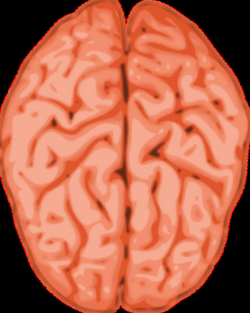 Human Brain PNG Image Background | PNG Arts