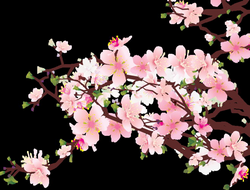 Japanese Cherry Blossom Clipart at GetDrawings.com | Free for ...