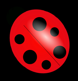 Ladybugs PNG Transparent Images | PNG All