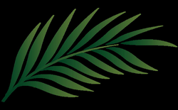 Palm Branch Image Free Cliparts That You Can Download To You | Palms ...