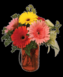 Gerbera Mason Jar   Royer's flowers and gifts - Flowers, Plants and ...