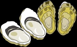 Oyster Clipart at GetDrawings.com | Free for personal use Oyster ...