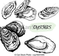 oyster clipart bivalve