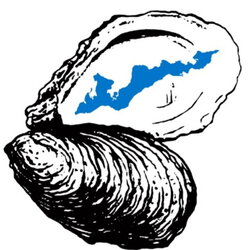 oyster clipart drawn