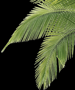 palm tree leaves - illustration | Art | Pinterest | Leaf ...
