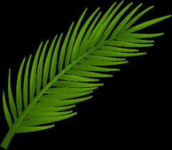 Palm Tree Leaf PNG Clip Art | Stencil | Pinterest | Palm tree leaves ...