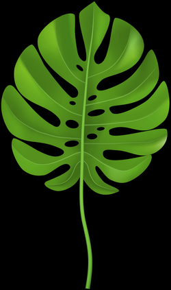 Tropical Palm Leaf Transparent PNG Clip Art Image | Gallery ...