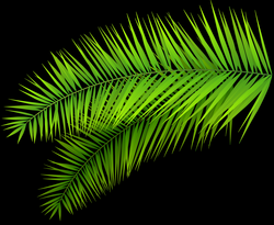 Palm Leaves Decoration PNG Clip Art Image | Színes brushok ...