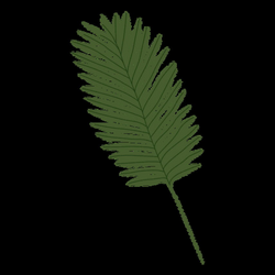 Palm leaf illustration - Transparent PNG & SVG vector