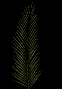 Palm Leaf Drawing at GetDrawings.com | Free for personal use Palm ...