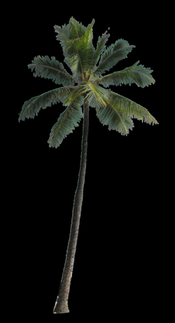 3d palm tree png, Picture #791943 3d palm tree png