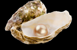 transparent pearls oyster