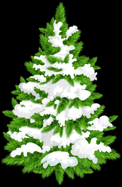Snowy Pine Tree Png Picture 807143 Snowy Pine Tree Png