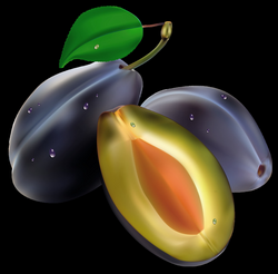 Plum PNG images free download