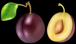 Plum Transparent PNG Clip Art Image | Gallery Yopriceville - High ...