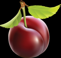 plum - Free PNG Clipart | TOPpng