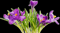 Colorful Flowers Transparent Background | PNG Mart